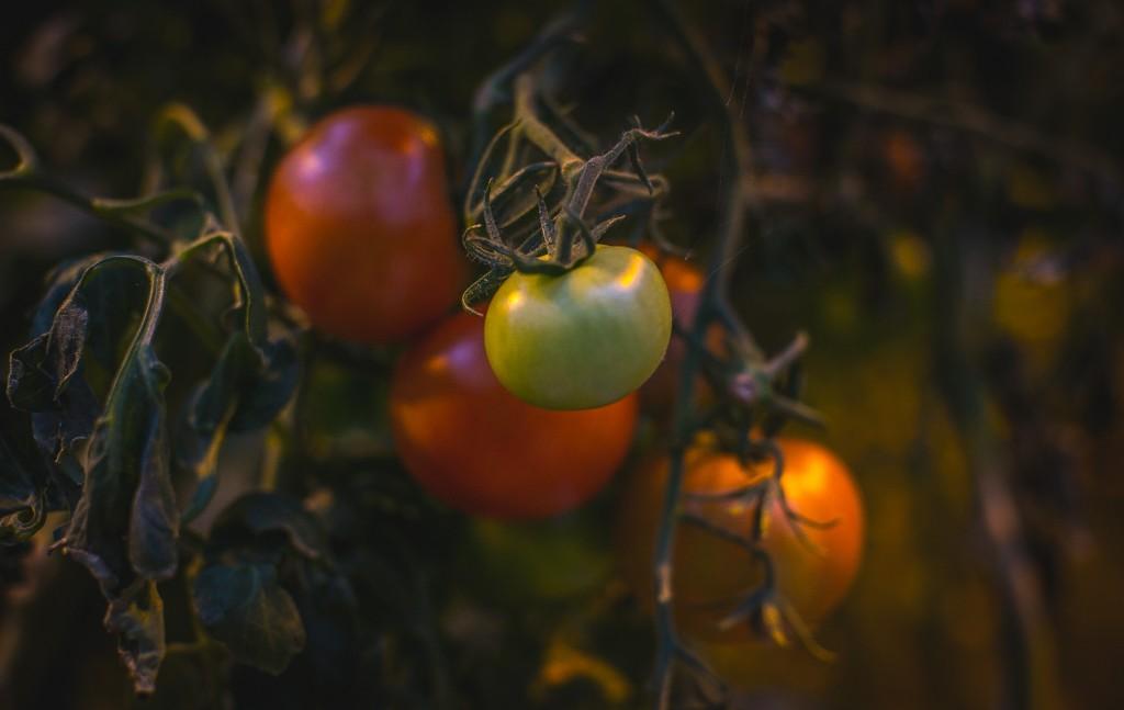 Food Photography | Iceland | Tomatos